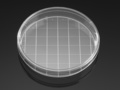 Falcon® 150 mm TC-treated Cell Culture Dish with 20 mm Grid, 10/Pack, 100/Case, Sterile