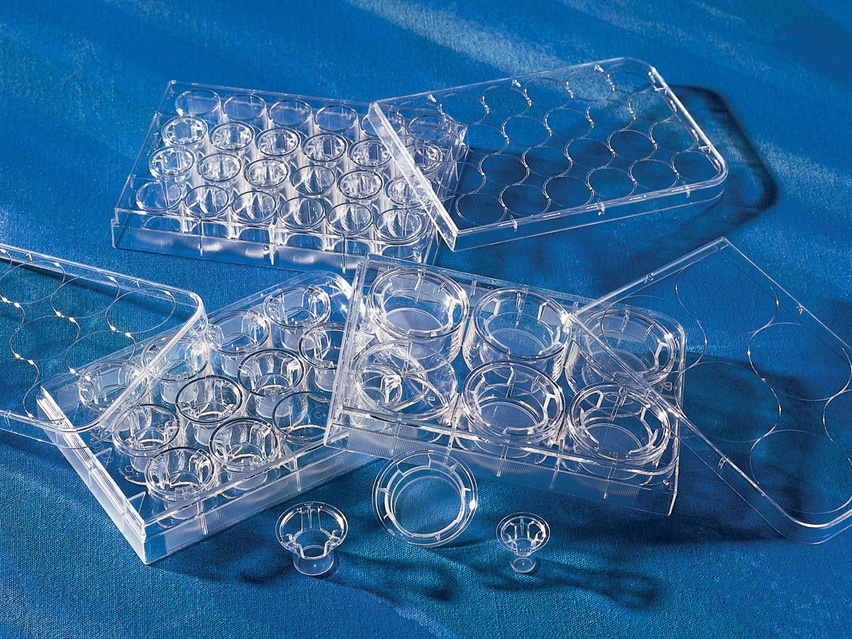Transwell®-COL Collagen-coated Inserts, PTFE Membrane