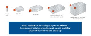 Adherent Culture Scale-up
