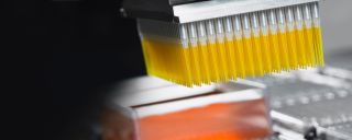 Beginning-to-end Solutions for PCR and Genomic Sample Preparation