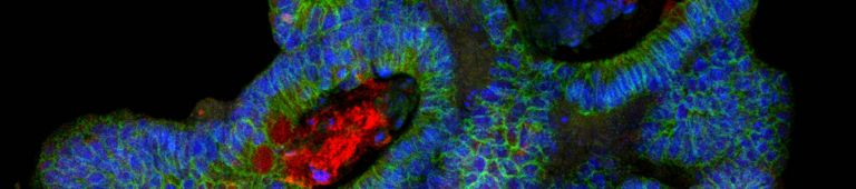 e-book: 3D Model Systems: Spheroids, Organoids, and Tissue Models