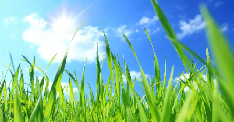 bright green grass across a blue sky